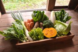 旬野菜パック「いろはBOX」