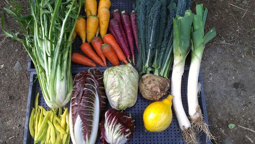 田倉ファームの彩り豊かなイタリア野菜