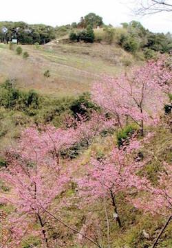 小学生の卒業記念植樹が1000本に