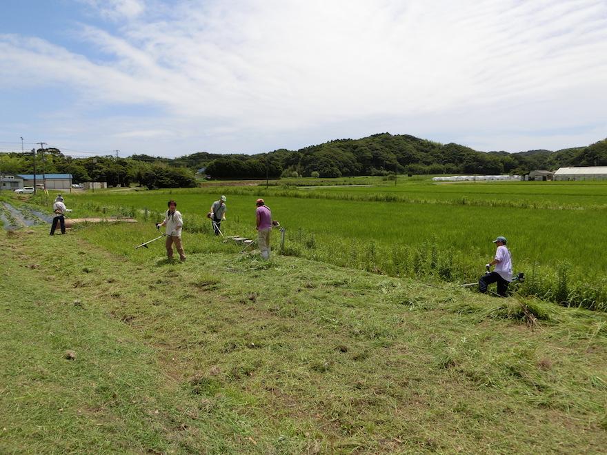 収穫祭を行う「たのくろ広場」を定期的に清掃する川戸地区の皆さん 青年も積極的に参加する