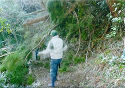 大木が倒れ行く手を遮る山道