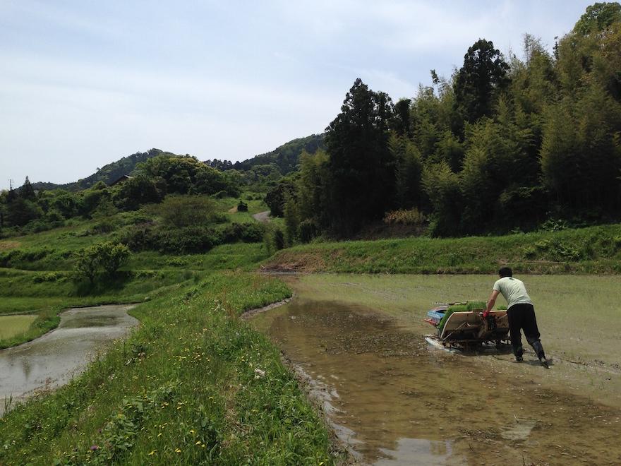 南房総有数の米どころ 曽呂