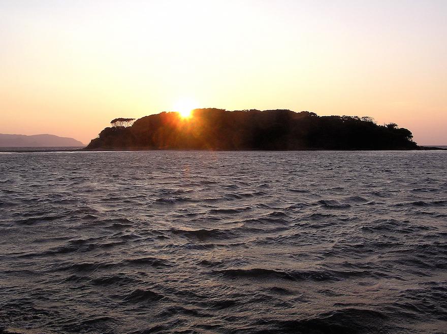 館山でサンゴが見られることをご存知ですか?