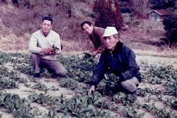 有機農業に切り替えた当時の写真(中央:稲葉さんの父)