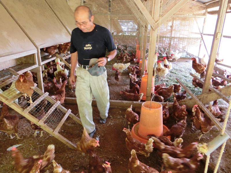 鶏舎内の卵を見回る稲葉さん できる限り鶏がストレスを感じることのない環境作りに勤めている