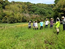 hafoon 緑肥植物についてのレクチャー