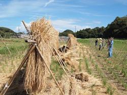 無農薬のお米を自給するワークショップ(NPO法人あわ地球村)