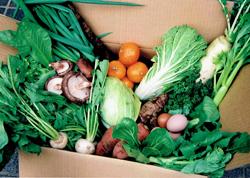 届けられる季節野菜 ※季節によって内容が異なります