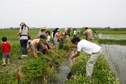 田んぼの水路での生きもの調査