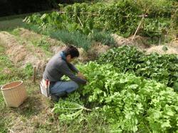 約1反部(300坪)で大豆と麦の二毛作を行い7畝(200坪)ほどの面積で多品目の野菜を自給する