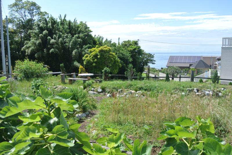 ハーブや花、麦など様々な植物が育つコミュニティガーデンLeaf & Root