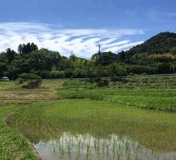 冬期にも水をはる冬期湛水不耕起栽培にて米作りを実践