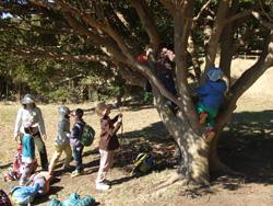はっぴーの子ども達は木登りが大好き