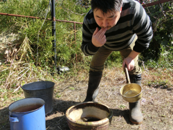 山桃の幹の皮を使った染料は、味の渋みで出来上がりの色合いを調整する