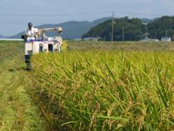 ほんまる農園お米収穫時の風景
