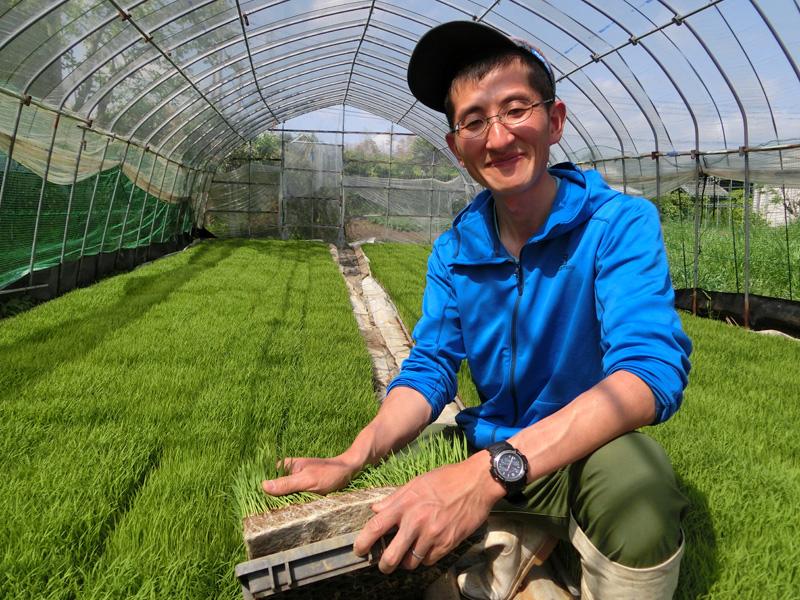 有機培土で育てるほんまる農園の苗作り 土中水分量の調整が難しくハウス内の気温が上がり過ぎないよう管理を怠らない