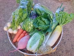旬の有機野菜セットの1例