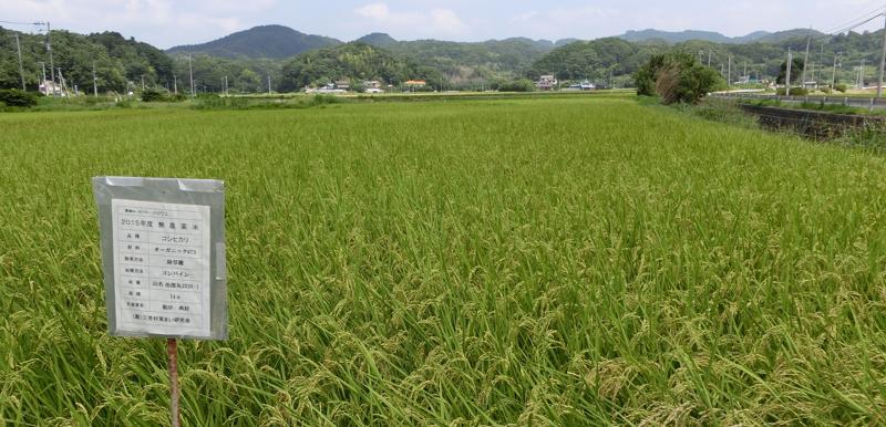 根岸さんが営農する田んぼ 所属する農事組合法人三芳村蛍まい研究会にて無農薬でお米の作付けを行っている