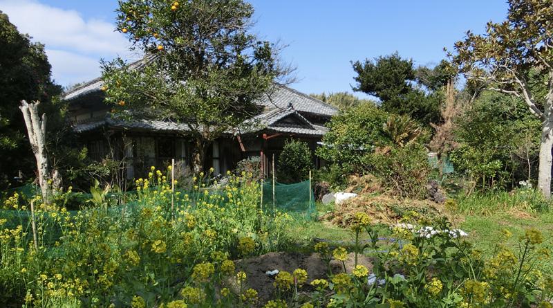 竹藪だったという庭は、手入れが進み野菜が植えられている
