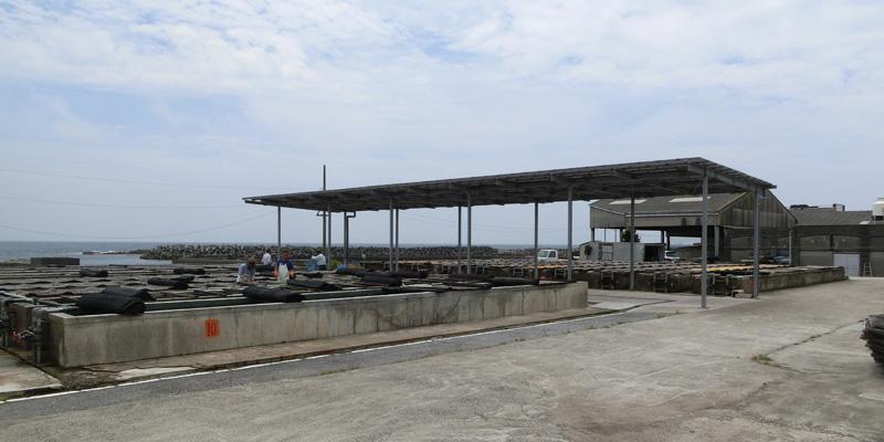 旧川口漁協から受け継がれてきた蓄養場ではアワビ、イセエビ、サザエなどが蓄え育てられている