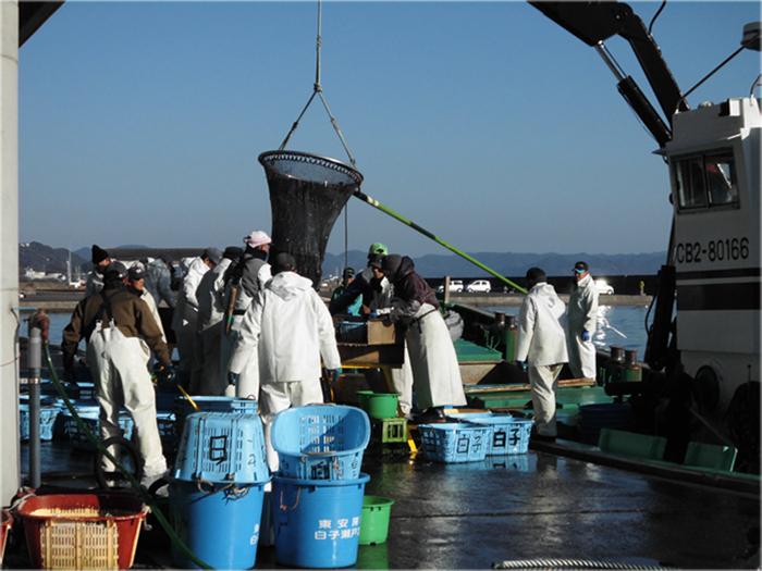 東安房漁協が所有する水深50mの大型定置網は漁協の職員が漁獲、維持管理を行っている