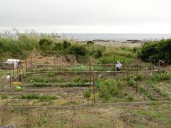 オラーガ裏手の畑で野菜を作りお店に提供する飯沼さんのお母さん(93歳)