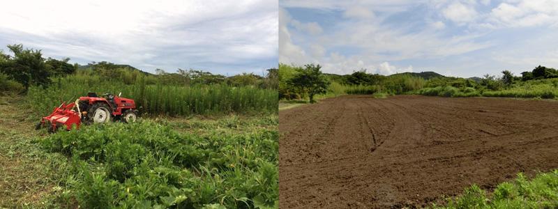 「おおやし」で実施されたセイタカアワダチソウ駆除作戦 前(写真左)と後(写真右)の比較