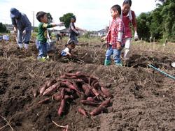 地区内親子向けの収穫体験