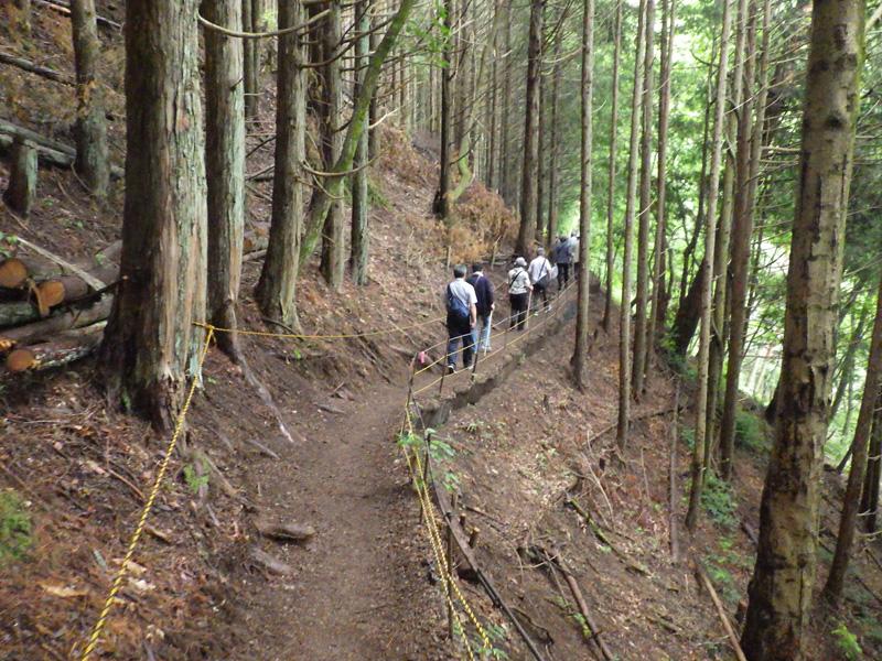 住民手づくりの天空の里ビューポイントへ続く山林内の遊歩道