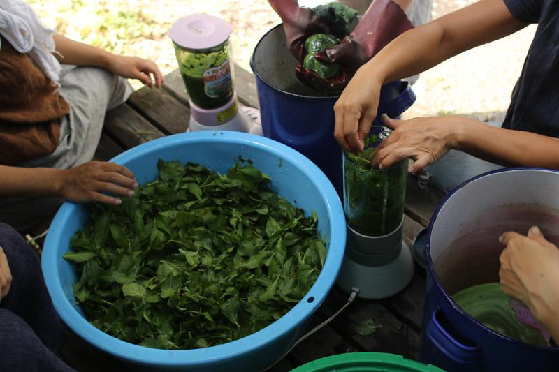 みずみずしい藍の葉をタライで洗います。