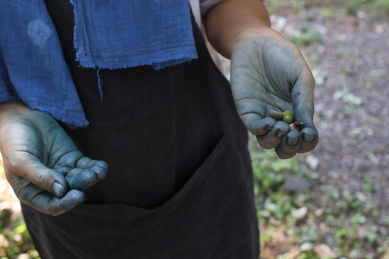 藍の青と木の実の色は、手の仕事の色。
