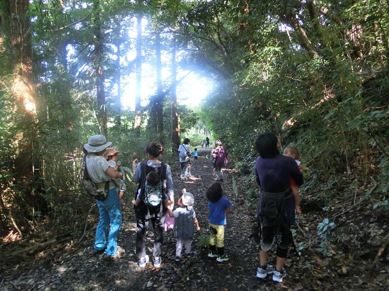 自然学校で勤務経験のある白井さんの植物ガイドを受けつつ、各々のペースで森を散策