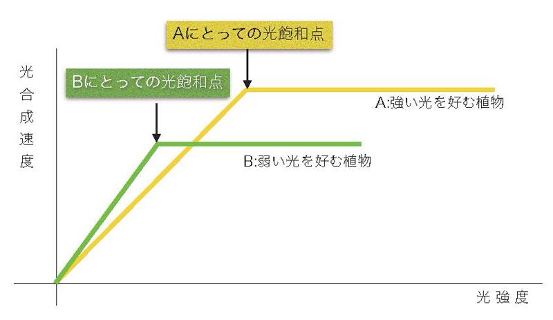 光飽和点の簡易説明図
