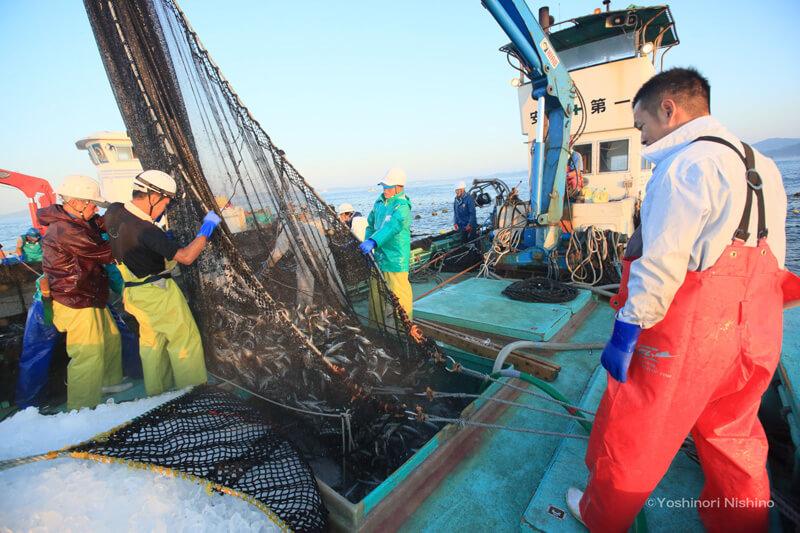 定置網にかかった魚を漁獲する瞬間(右:和田謙太郎さん)  写真提供:西野嘉憲