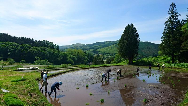 奈良さんのお父さんが移住した岩手県遠野で毎年恒例となった田植えのお手伝い