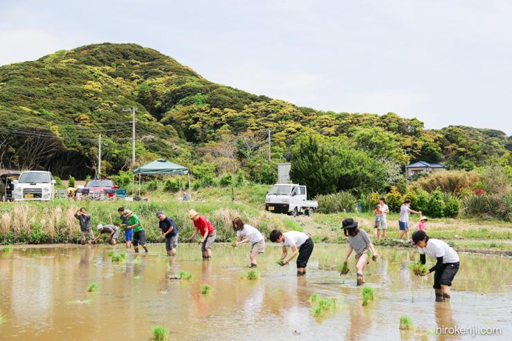 金谷の移住者が営農する田んぼで田植えを手伝う「まるも」コミュニティ 秋には収穫祭もみんなで楽しむ