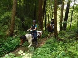 馬森牧場での乗馬体験の様子