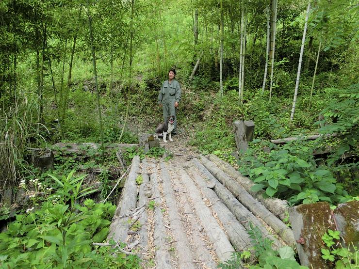 菅野さんが自力で架けたという敷地内の橋 富山(とみさん)から名付けられた牧羊犬のトミーとともに