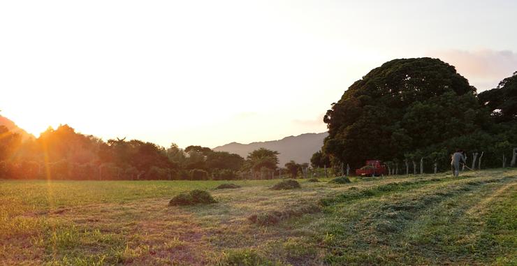 高齢化で耕作できなくなった近くの農地を引き受け、牧草地として利用する