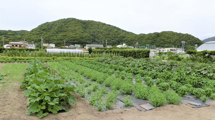 大紺屋(おおごや)農園 年間80品目にもおよぶイタリア野菜、タイ野菜、日本の野菜を栽培している