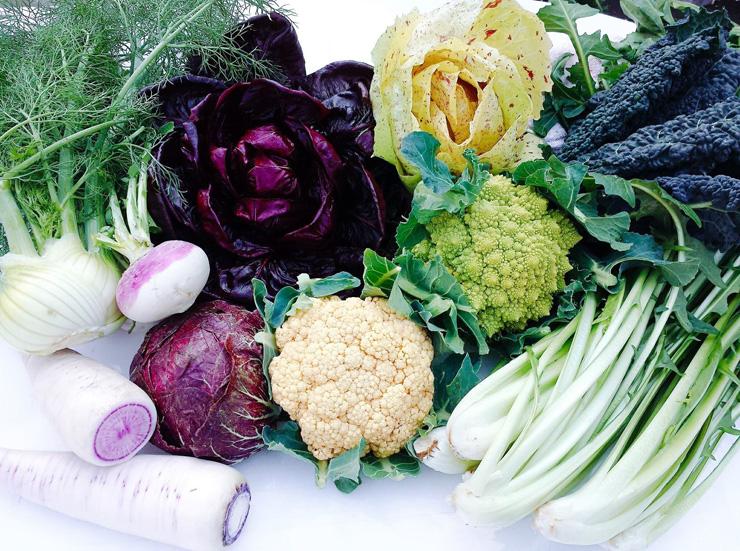 大紺屋農園で採れる冬野菜の一例