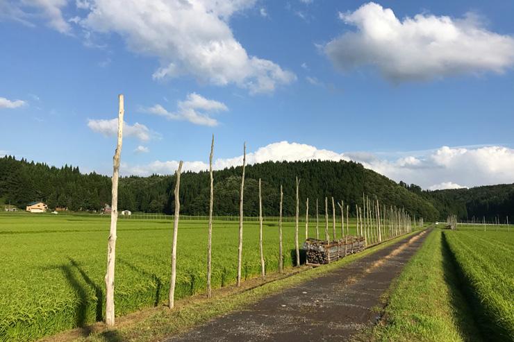 稲架(はさ)の縦棒は腐りにくい栗の木を使い、冬も打ち込んだまま。50~70年使用しており、「鎌鼬」撮影時のものが残っている可能性がある