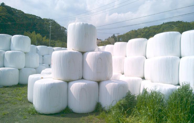 収穫した飼料作物は細断してラッピングし、自然発酵によって熟成させたあとTMRの製造に使われる