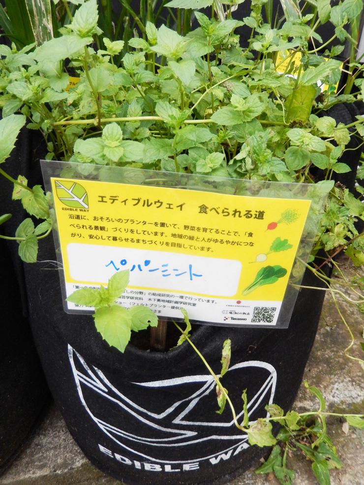 プランターは植物のラベルつき。住民には、外から見えるところに置くようにお願いしているそう。