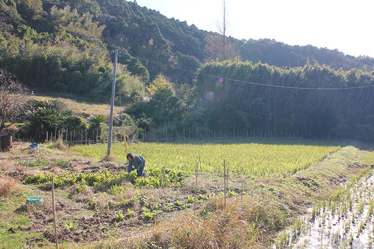 家の目の前にある田んぼと畑