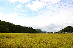 村内にはゆるやかな農山村の風景が広がっている
