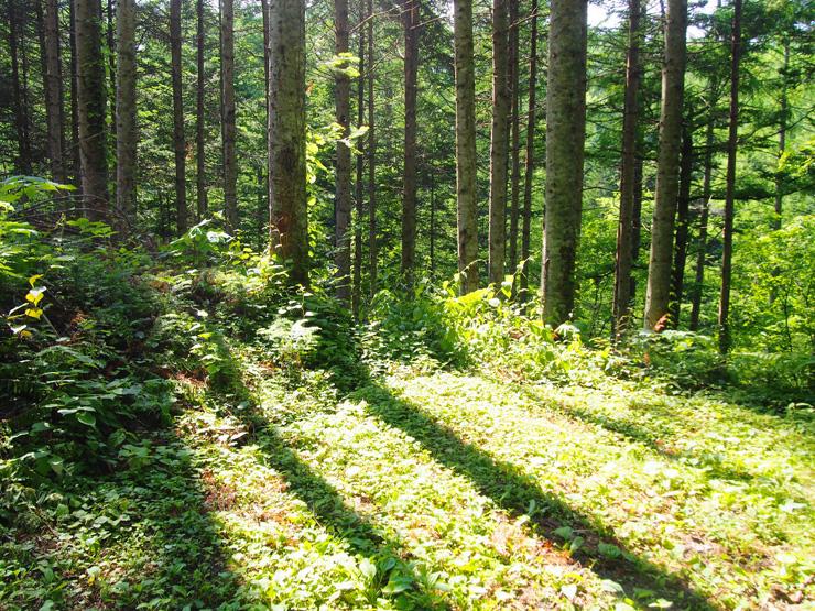 町面積の9割が森林