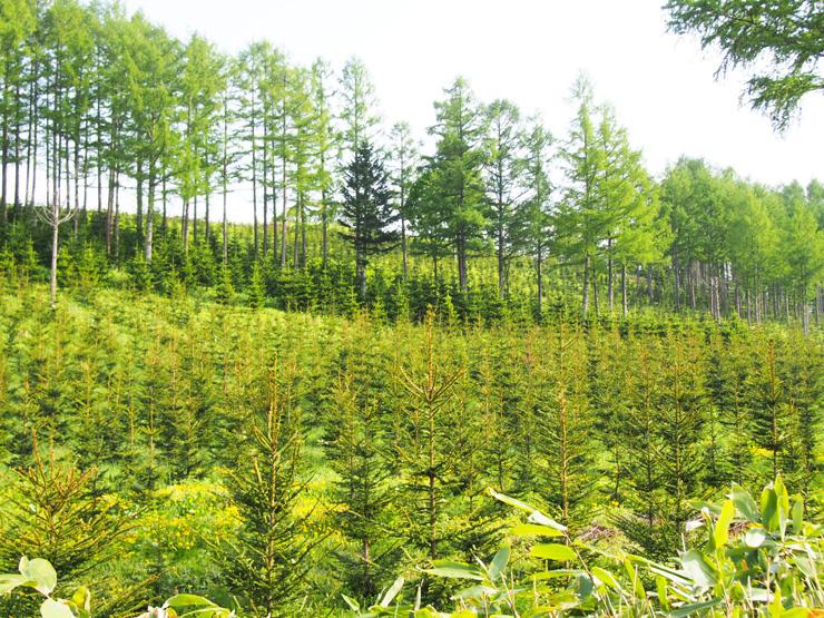 循環型森林経営