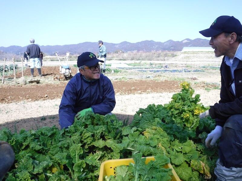 食用ナバナを収穫する参加者