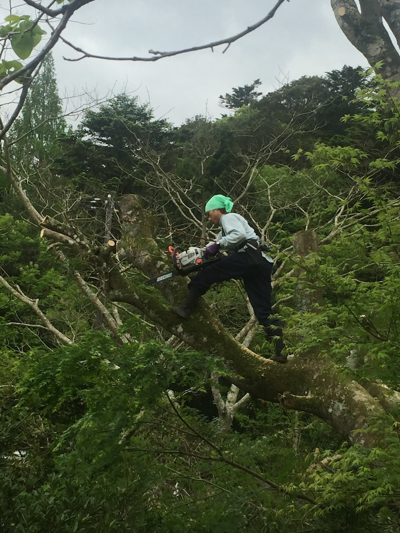 初日の整備様子。大木の伐採は、木に登って伐る技術を持つ地元の若者が担当。